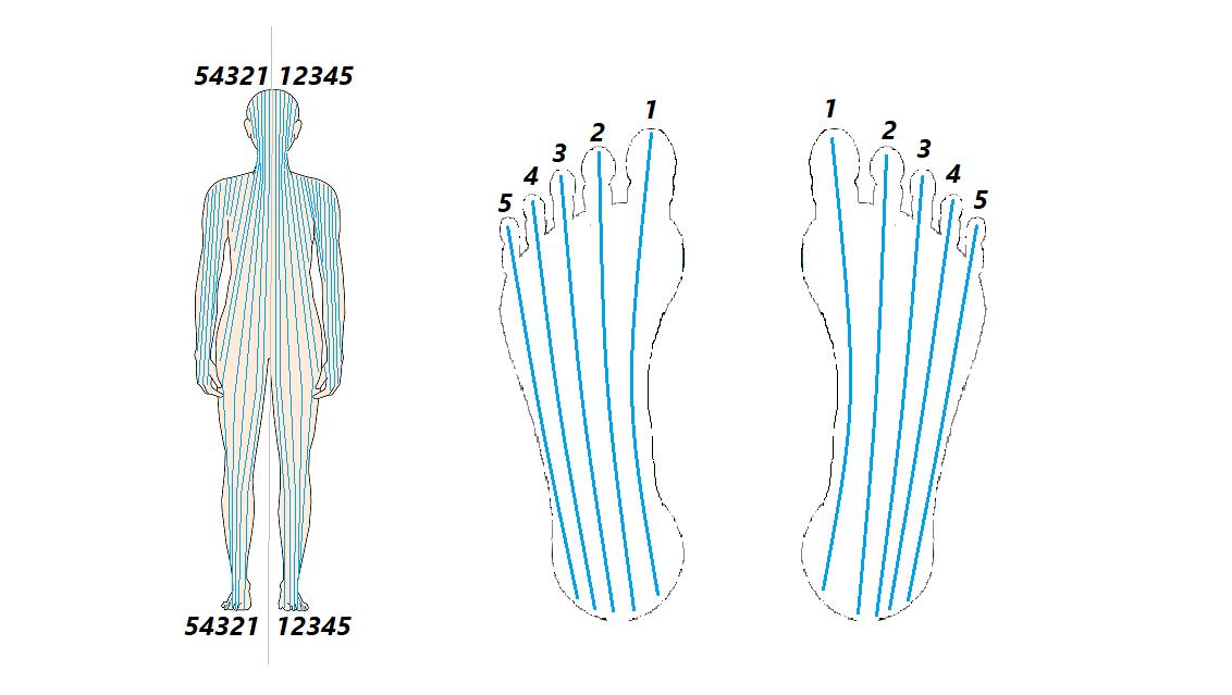 vertikální zóny