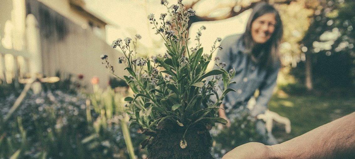 sázení rostlin zahradniceni